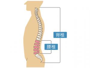 横向き背骨図