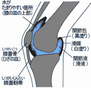 膝の関節液