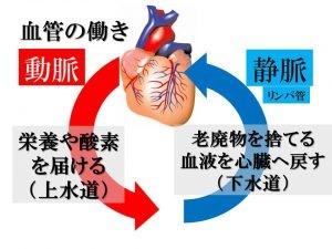 血液循環のしくみ