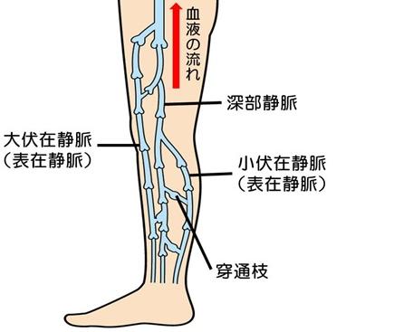 足の静脈図